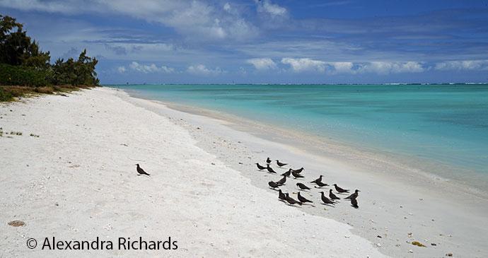 Ile aux Cocos nesting area © Alexandra Richards