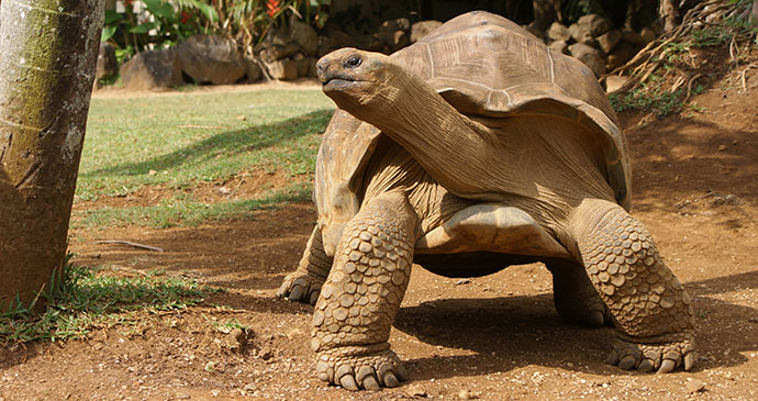 Giant Tortoise Reserve Mauritius by Catalinka Shutterstock