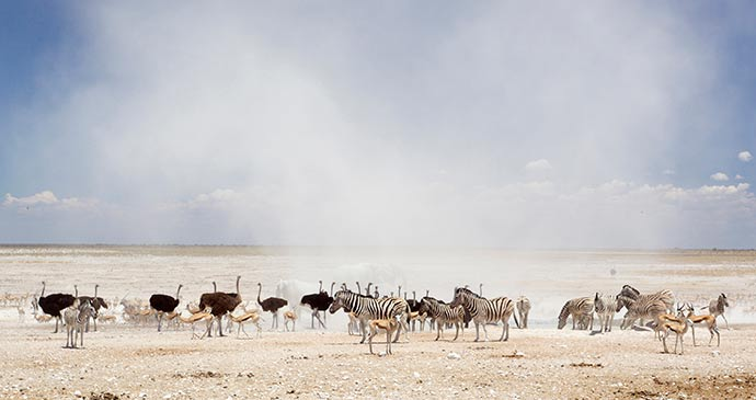 Etosha National Park Namibia by Yathin S Krishnappa, Wikimedia Commons