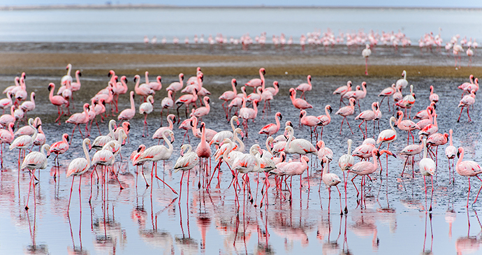 Walvis Bay Namibia by Anton Ivanov, Shutterstock