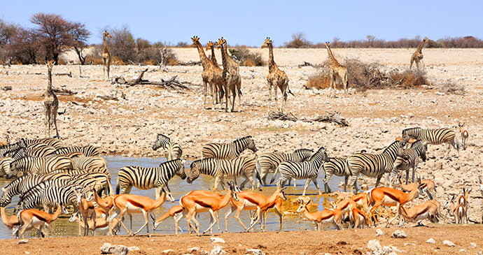 Etosha National Park Namibia by Paula French, Shutterstock