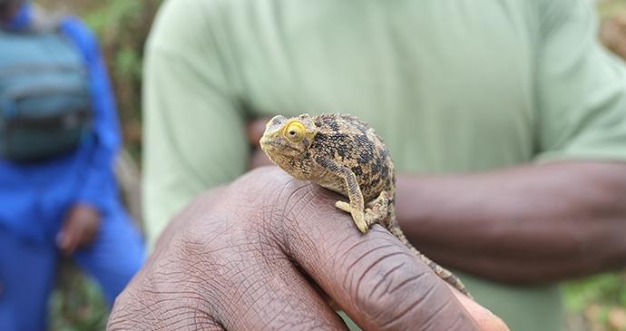 Chameleon in Rwanda © PhotogrphyNomad, Shutterstock