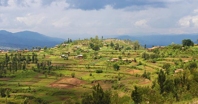 Mount huye coffee, Rwanda by © Anna Moores