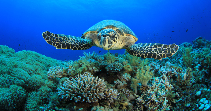 Hawksbill turtle, São Tomé and Príncipe by Rich Carey, Shutterstock