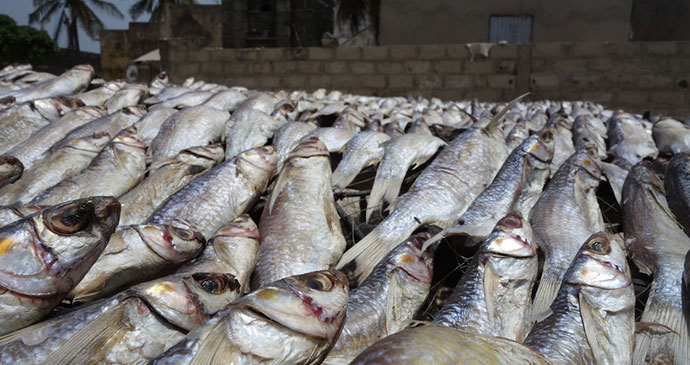 Fish, Senegal by Sean Connolly