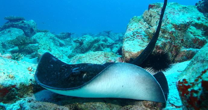 Stingray, Seychelles, Africa by Seychelles Tourism Board