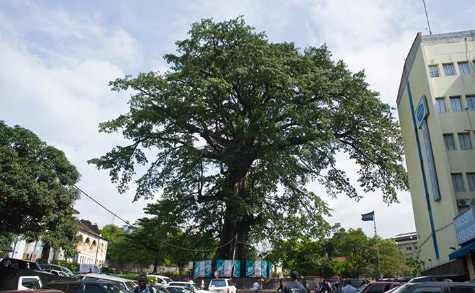 Cotton Tree Freetown Sierra Leone by the National Tourist Board of Sierra Leone