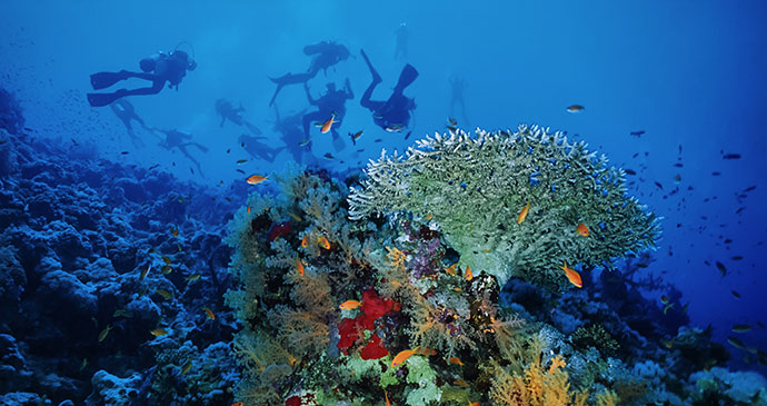 Diving Red Sea Sudan by Angelo Glampiccolo, Shutterstock