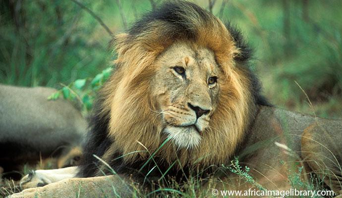 Kruger National Park South Africa by Ariadne Van Zandbergen