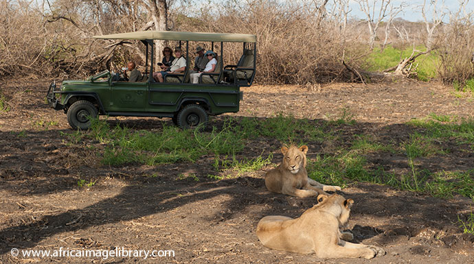 Lions Selous Game Reserve Tanzania by Ariadne Van Zandbergen