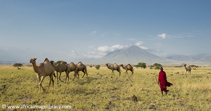 Camel safari Maasai Tanzania by Ariadne Van Zandbergen