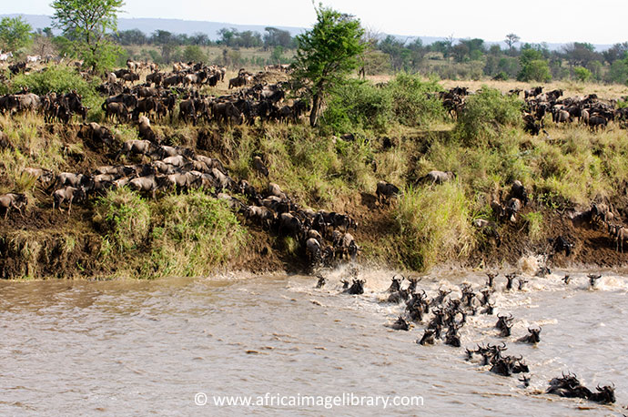 Great migration Serengeti National Park Tanzania by Ariadne Van Zandbergen