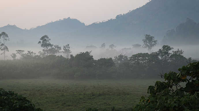 Bwindi Impenetrable National Park © Dom Tulett