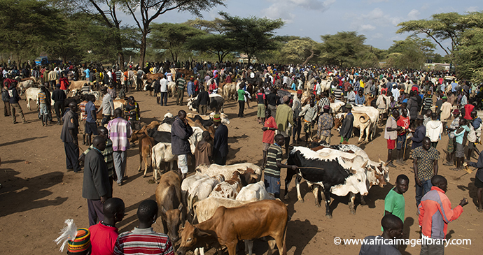 Moroto Cattle Market Uganda by Ariadne Van Zanbergen Africa Image Library best markets in the world