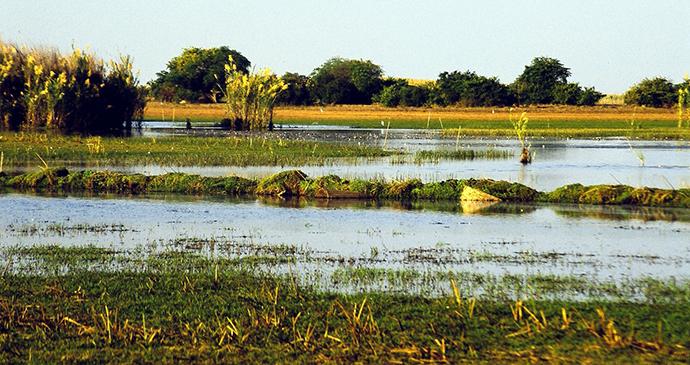 Swamp, Bangweulu Wetlands, Zambia by Mehmet Karatay, Wikimedia Commons