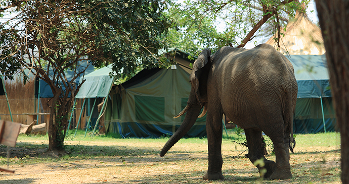Elephant campsite South Luangwa National Park ZAmbia by Bob Suir