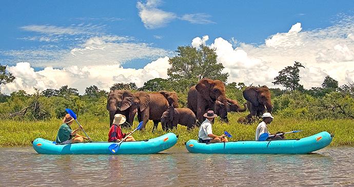 Canoe safari elephants Zimbabwe by Wild Horizons