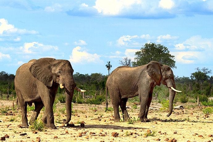 Elephant Hwange National Park Zimbabwe best places to see elephants