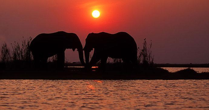 elephants Mana Pools National Park Zimbabwe © Shutterstock, EcoPrint