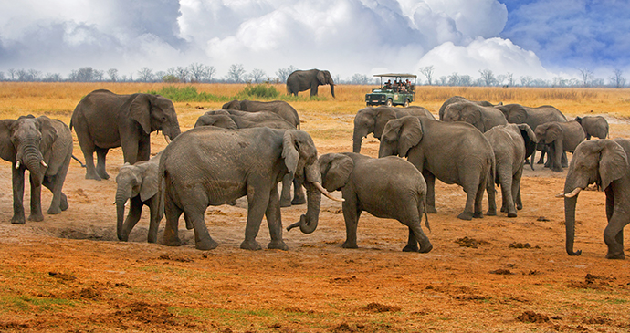 Elephants Hwange National Park Zimbabwe by Paula French Shutterstock