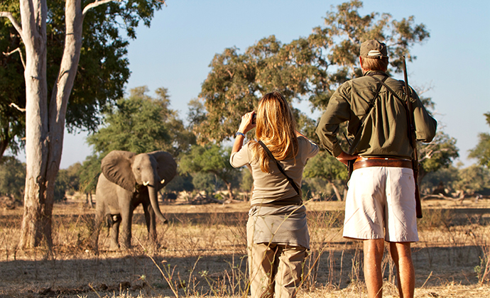 Elephant Mana Pools National Park Zimbabwe by Claudio Soldi Shutterstock