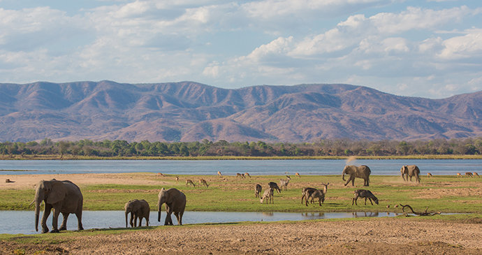 Elephants Zambezi River Zimbabwe by Jez Bennett Shutterstock