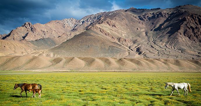 Horse near Murghab Tajikistan by Damon Lynch, Shutterstock