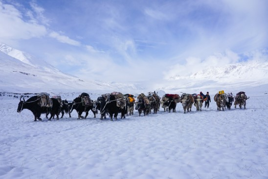 Yaks Little Pamirs Afghanistan © Jonny Duncan