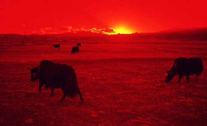 Litang grasslands Tibet China by Pablomielniezuk CC-BY-SA