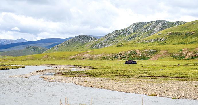 Grasslands Tibet China by HelloRF Zcool, Shutterstock