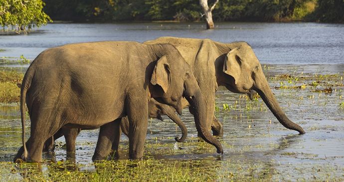 Elephants Pinawella Sri Lanka by TravelLocal