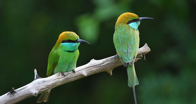 Green bee eater Wilpattu Sri Lanka by bobby20, Shutterstock