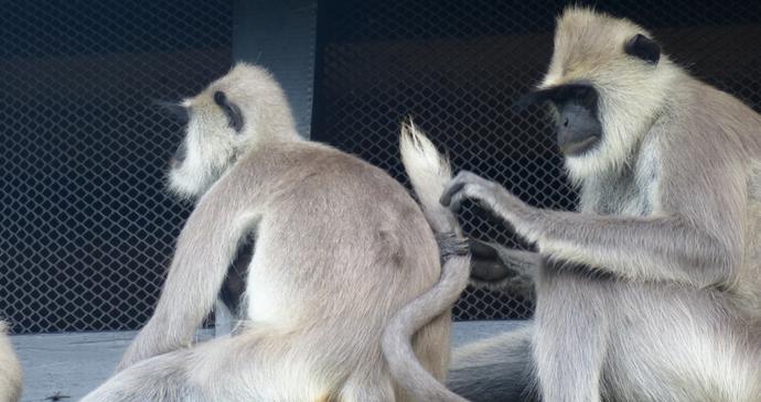 Monkeys on safari in Sri Lanka by Hilary Bradt