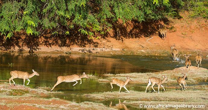Yala National Park Sri Lanka by Ariadne Van Zandbergen