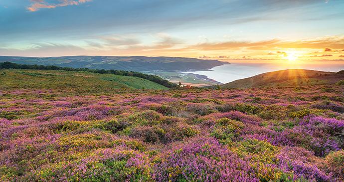 Bossington Hill Exmoor Somerset by Helen Hotson Shutterstock