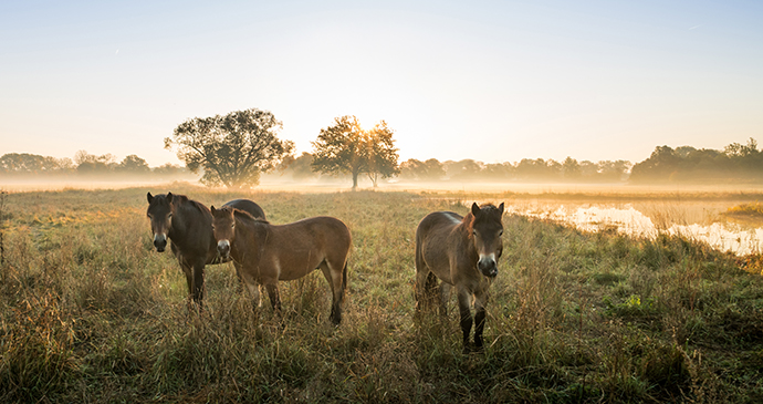 Exmoor Pony Centre, Exmoor, UK by JakIZdenek, Shutterstock