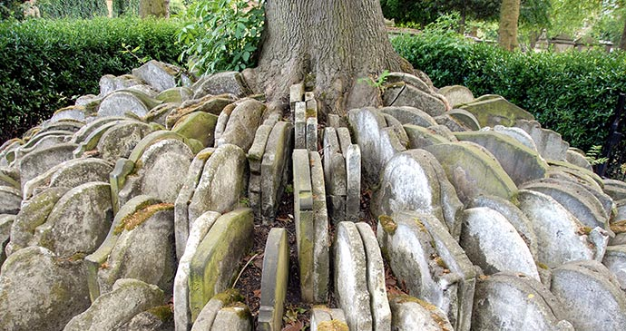 Thomas Hardy Tree London UK by Peter Arkell