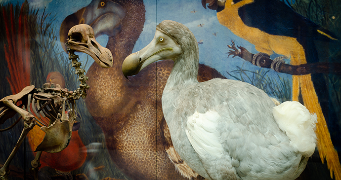 Dodo, Oxford, Cotswolds, England by Oxford Museum of Natural History