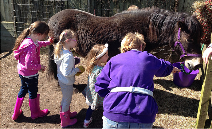 Exmoor Pony Centre Somerset by Exmoor Pony Centre