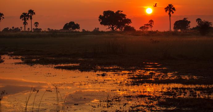 Sunrise over the marshlands of the Okavango Delta in Botswana by Pete Niesen Shutterstock
