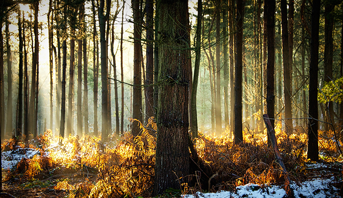 Delamere Forest England by CC-BY Paul