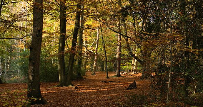 Burnham Beeches Chilterns by Soulminous Shutterstock