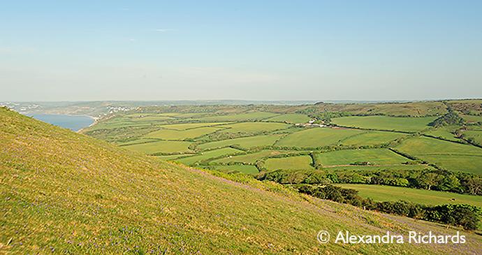 West Dorset countryside, Dorset, England, British Isles © Alexandra Richards