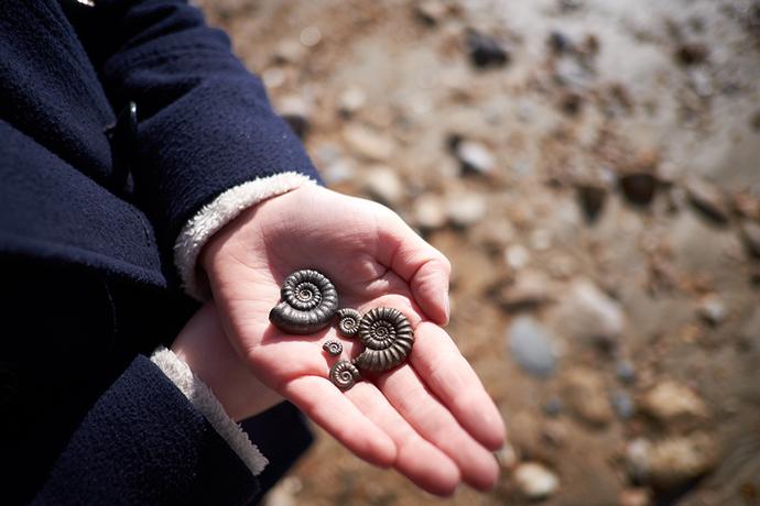 Fossil hunting Lyme Regis Jurassic Coast Dorset England mattxfoto, Shutterstock
