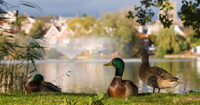 Diss Mere, Diss, Norfolk by Duncan Kerridge Photography