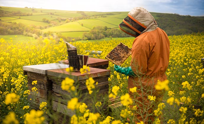 Quince Honey Farm North Devon England UK by Quince Honey Farm