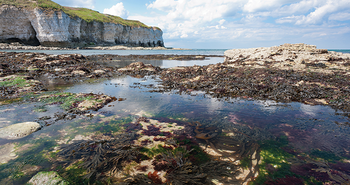 Flamborough Head by George Stoyle, Yorkshire Wildlife Trust