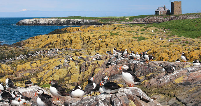 Puffins Farne Islands Northumberland UK by engels, Shutterstock