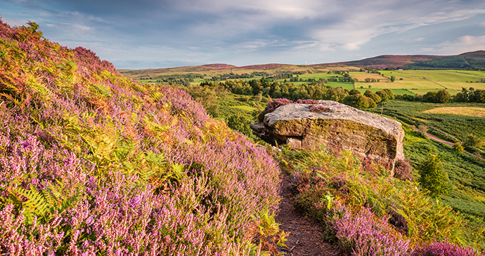 Cheviot Hills, Northumberland, UK by Dave Head, Shutterstock