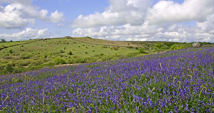 Bluebells, Dartmoor, South Devon by Unique Devon Tours